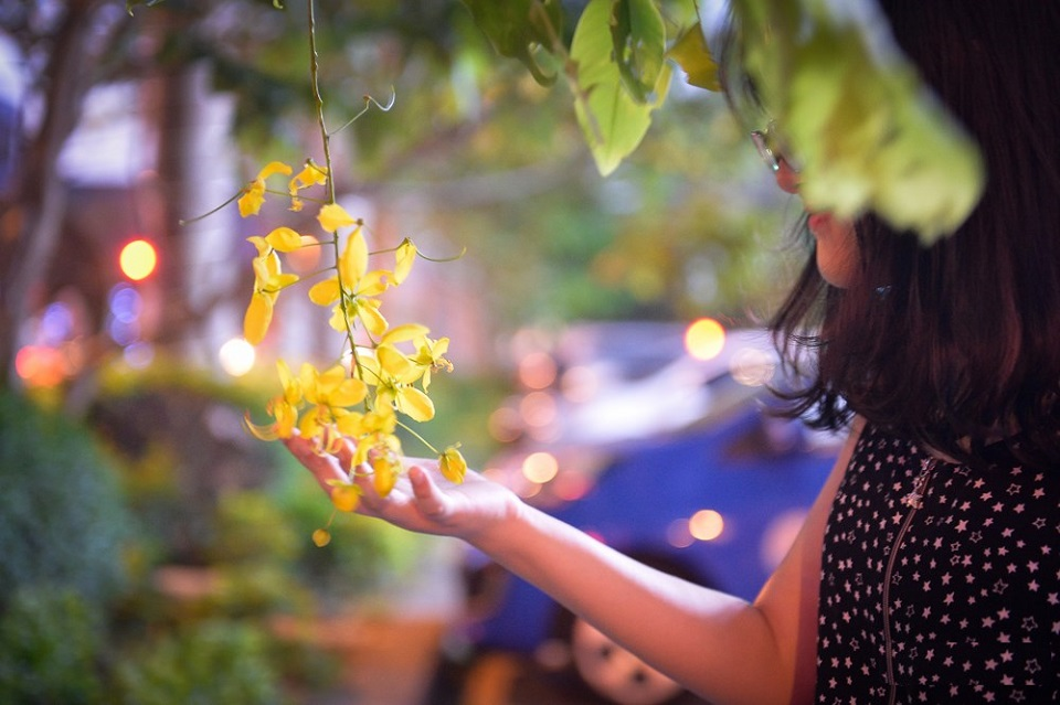 vẻ đẹp hoa muồng vàng hoàng yến